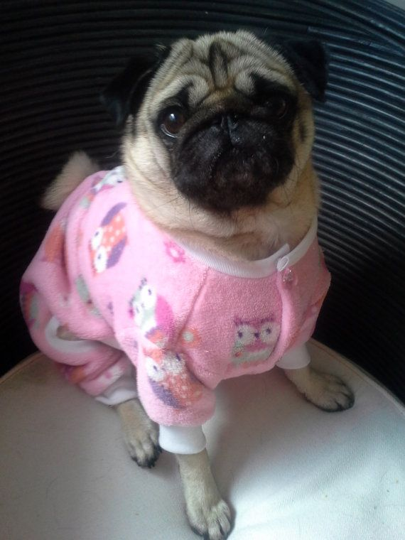 I M Not One To Dress Our Pugs In Clothes But This Is Just So