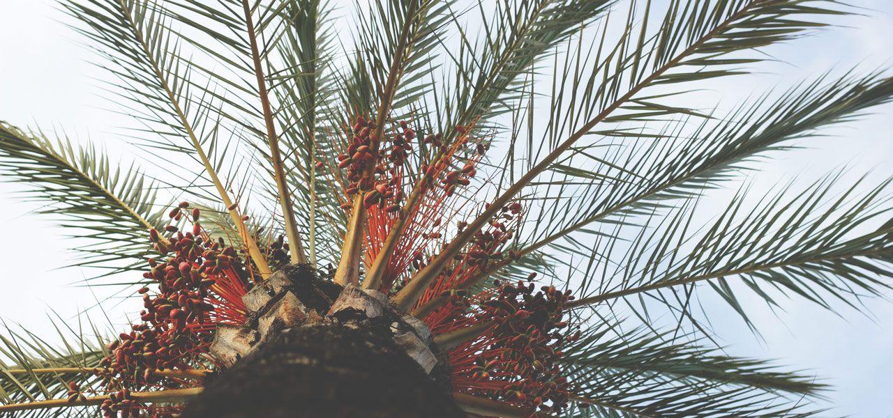Palmöl Gesundheit