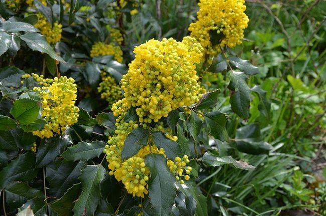 Krzewy Do Cienia Jakie Krzewy Cieniolubne Wybrac Do Ogrodu Galeria I Zdjecia Plants Garden