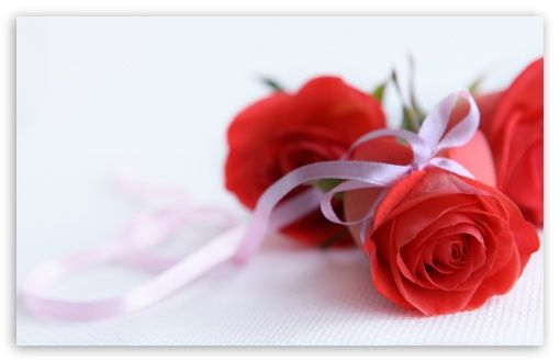 Red Roses On White Background Wallpaper Rose Flower Wallpaper Red Rose Pictures Flower Wallpaper