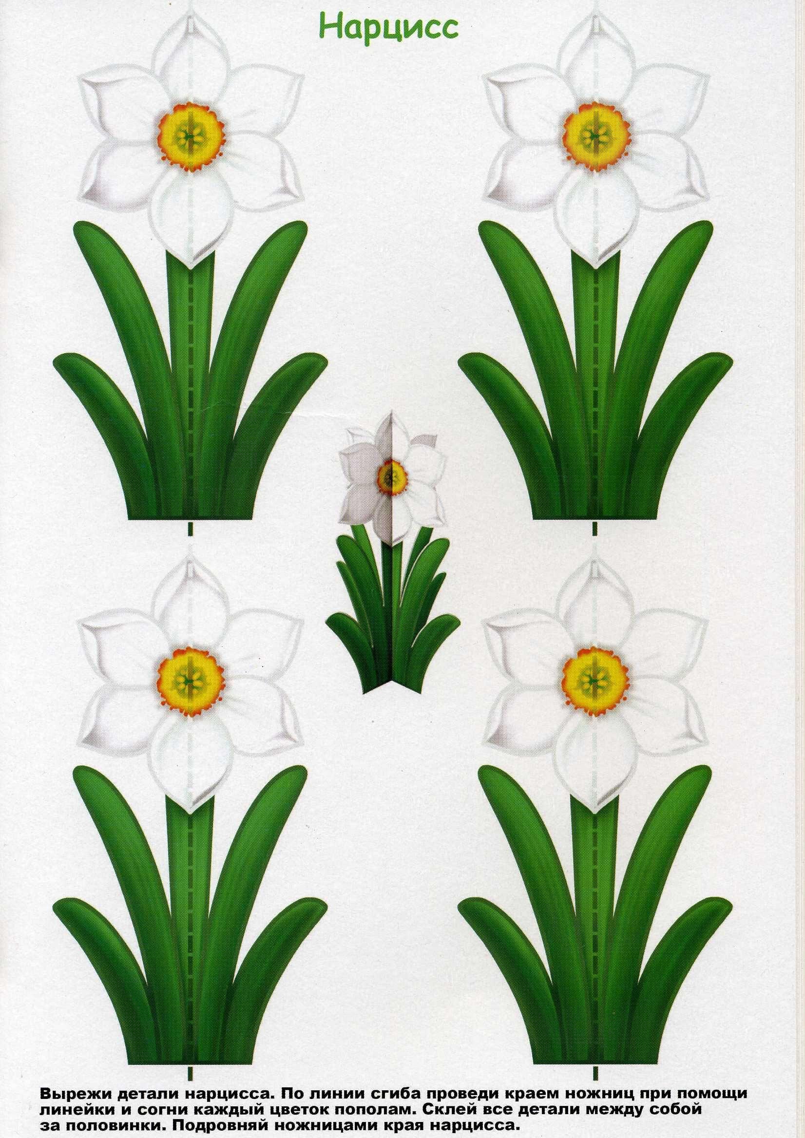 Pin by evelien van der vinne on creatief pinterest flowers jar