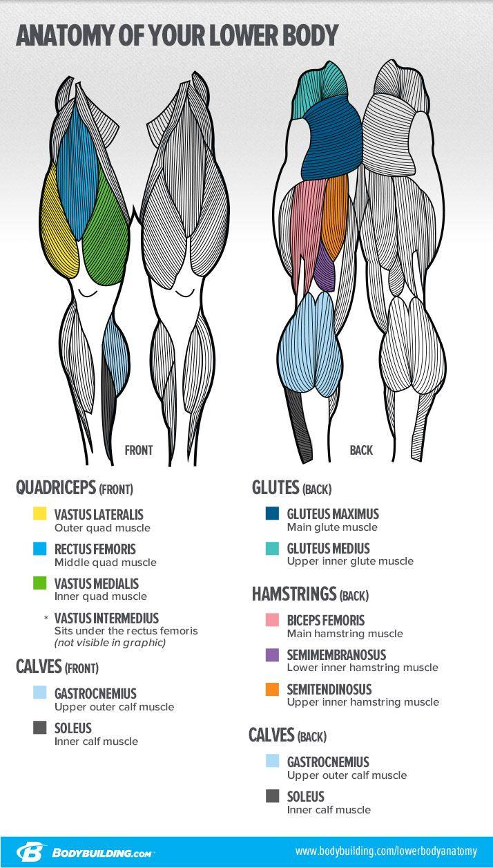 7 Lessons That Will Transform Your Legs Fitness Anatomical