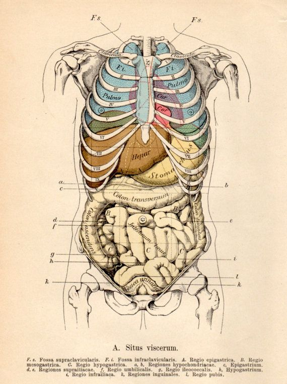 1901 Anatomy Antique Print Vintage Lithograph Situs Viscerum