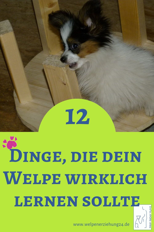 Was Ist Das Wichtigste Bei Der Welpenerziehung Welpenerziehung Welpen Hunde Welpen Erziehung