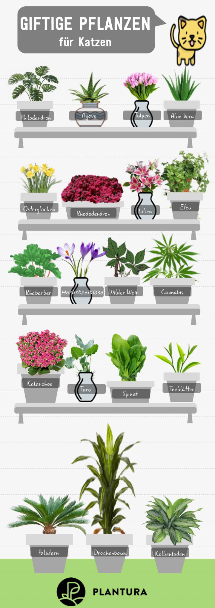 10 giftige Zimmerpflanzen für Haustiere | Giftige pflanzen ...