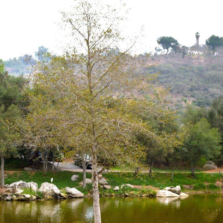 Rates — Lilac Oaks   Oaks, San diego getaway, Tent camping