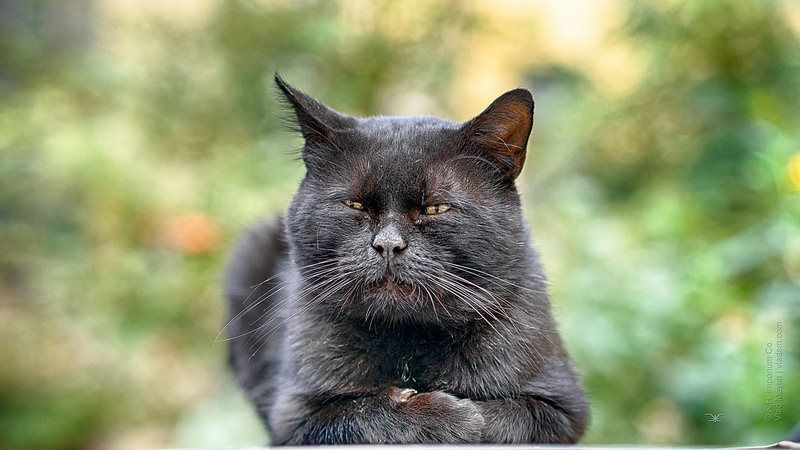 Wise stray cat in a yard | Cats, Stray cat, Animals