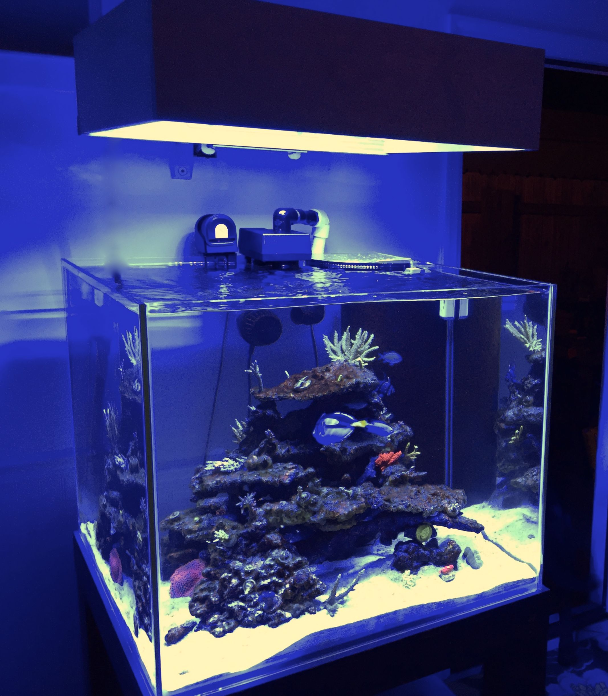 Reel Reef Rock And Tonga Rock Aquascaping