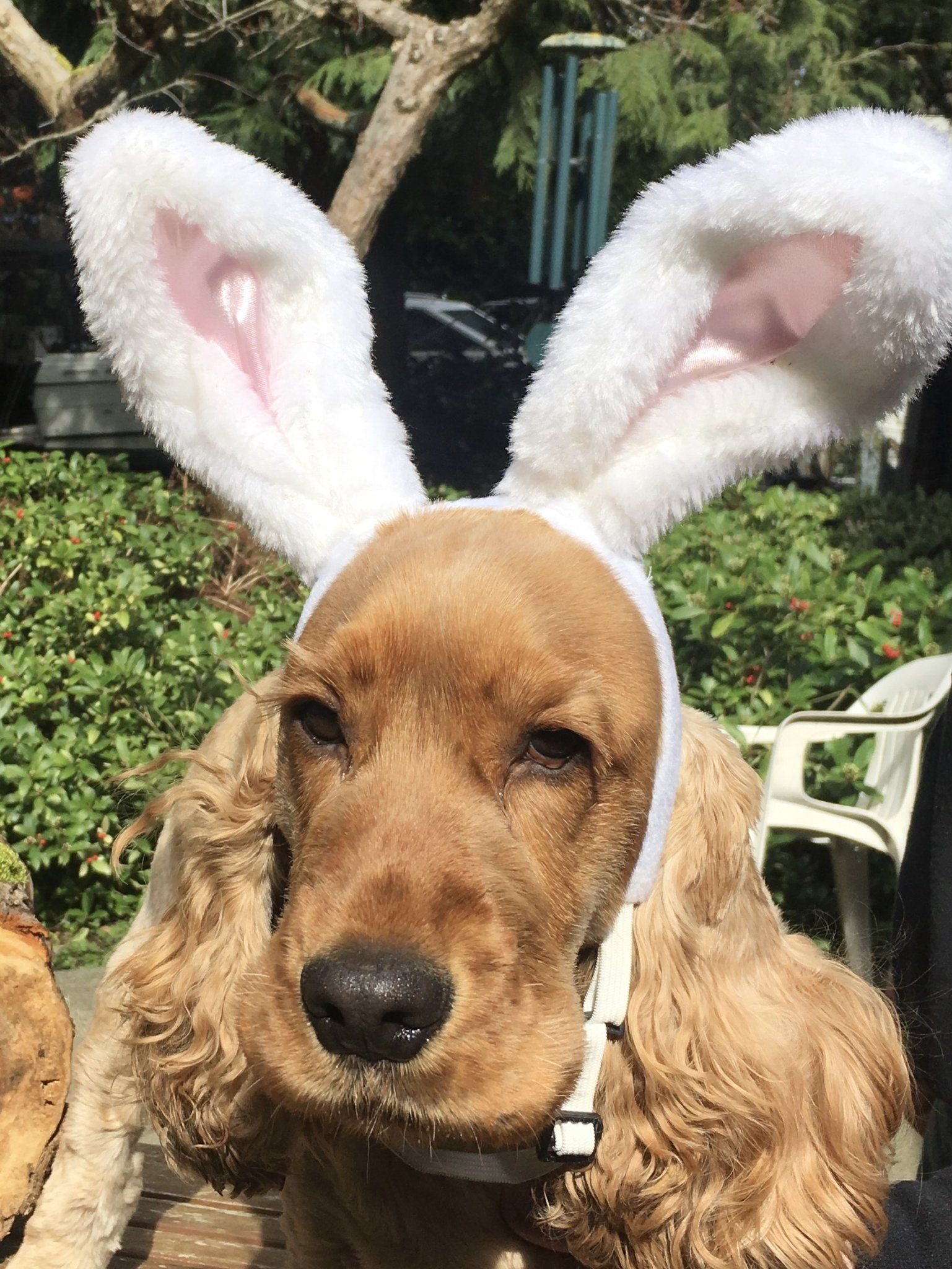 Pinterest Catherinesullivan2017 Chiot Canin Chien