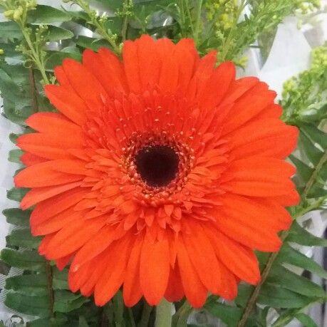Ela é delicada, linda e me lembra diversão quando vejo tantas cores. É a minha florzinha, minha Lavínia!