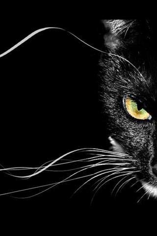 Black Cat Mystery Fond D Ecran Chat Chat Chat Noir