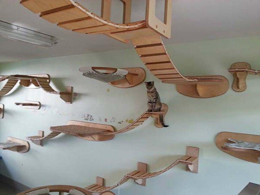 Una casa a misura di gatto i mobili per felini terra for Avere una casa costruita sulla terra