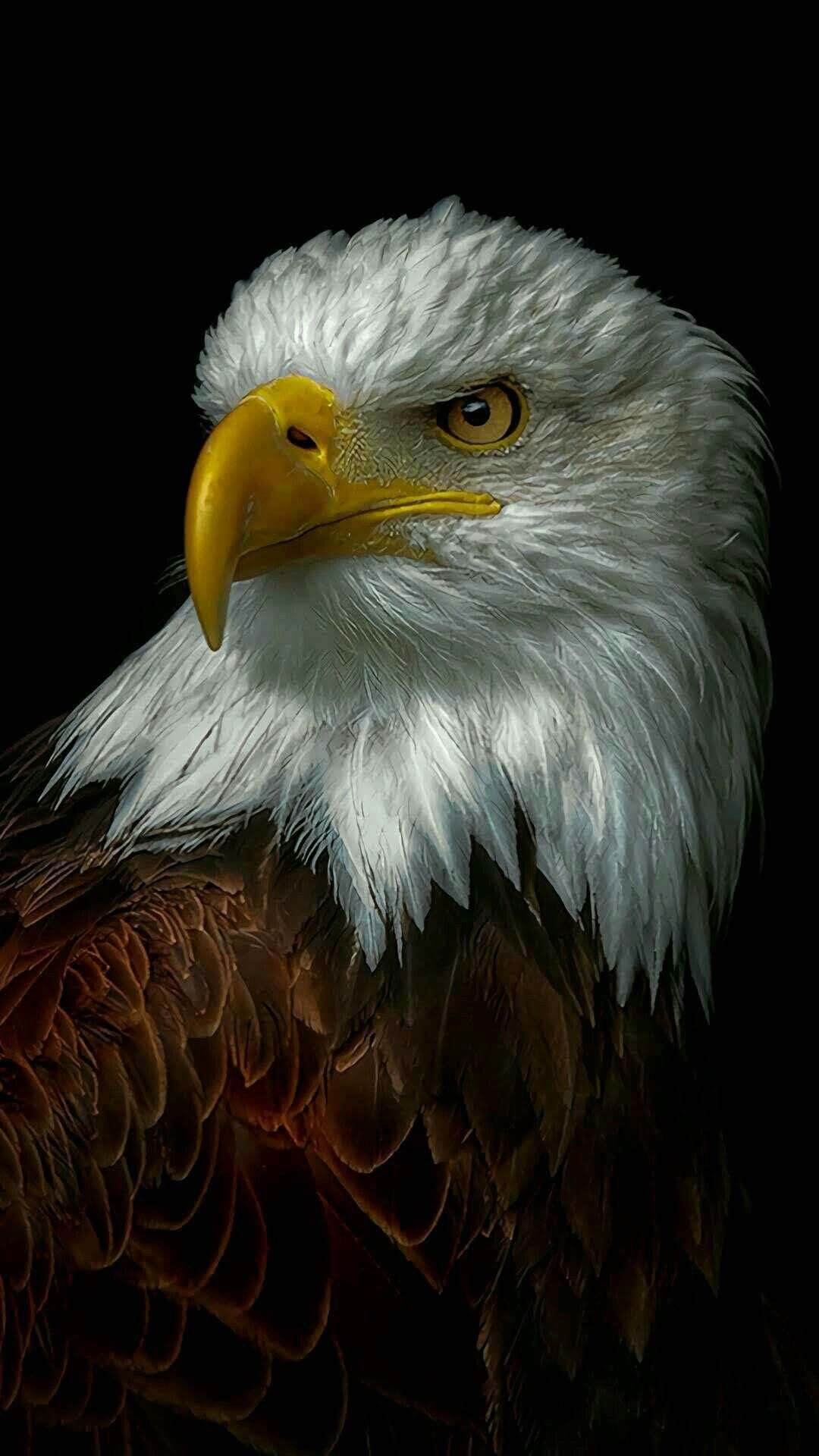 Pin by nur sheela on Birds Bald eagle, Animals, Eagle