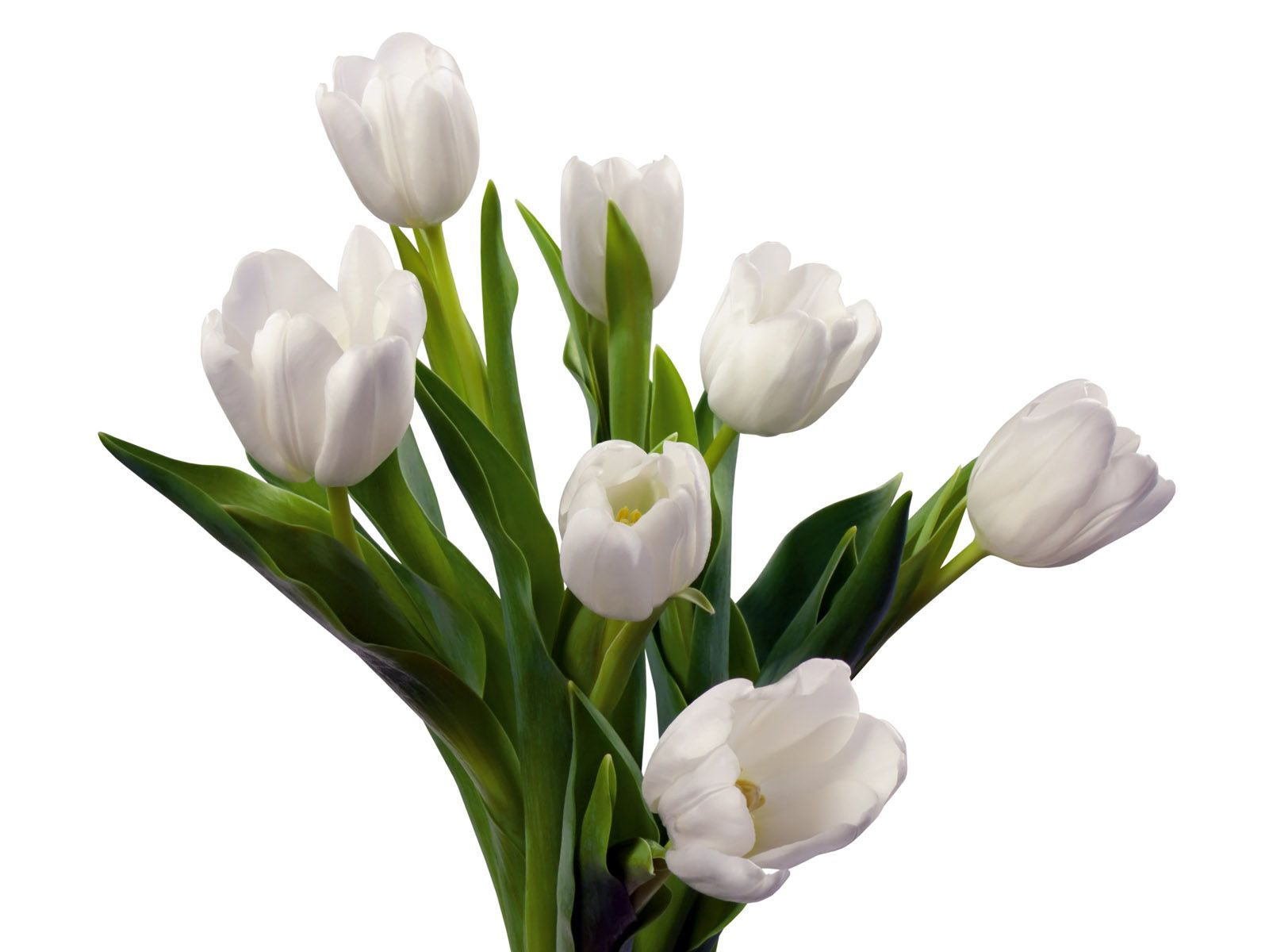 White tulip flowers bouquet spring flowers pinterest white white tulip flowers bouquet dhlflorist Image collections