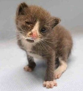 Special Plea 09 20 15 Meet Scooba Scooba Is A 3 Week Old