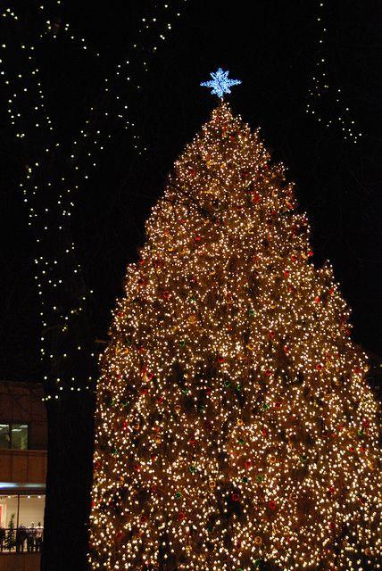 Beautiful tree, Boston MA Beautiful, Christmas trees and Xmas