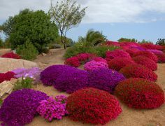 Photo of # 50 – I Giardini di Sardegna