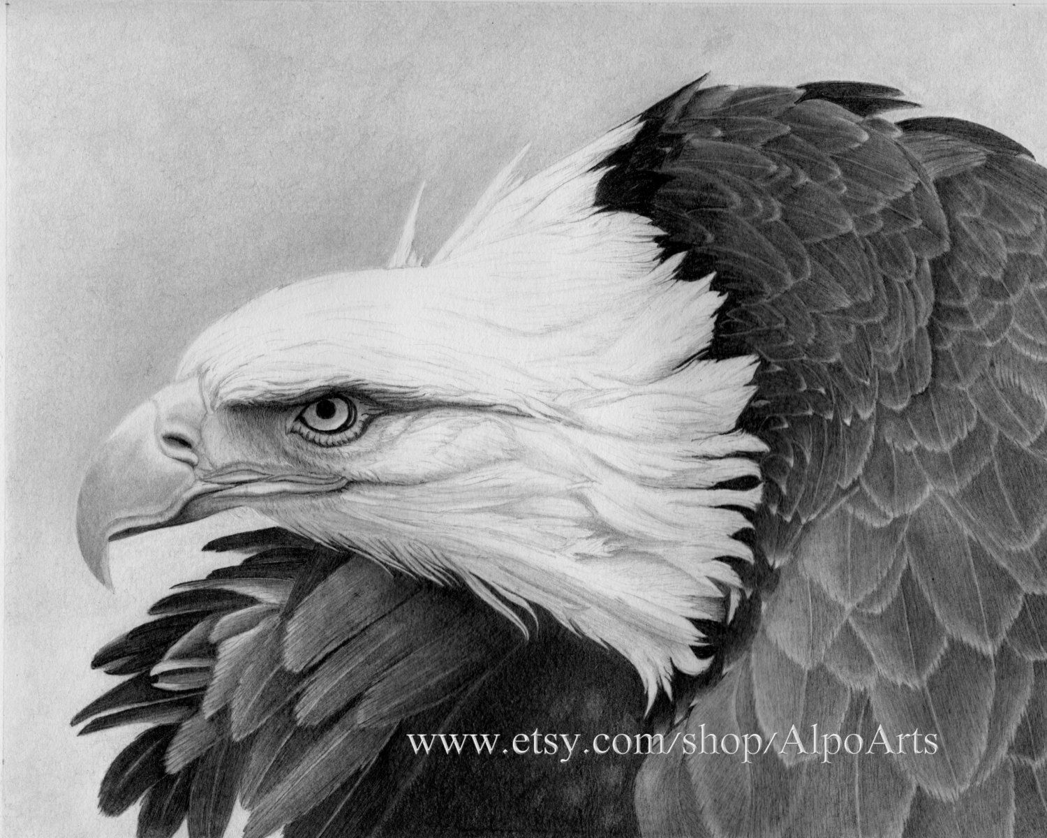 Bald eagle standing bald eagle hawks in flight hot air balloon in - Eagle Pencil Drawing Realistic Wildlife Drawing With Bald Eagle In Flight Patriotic Eagle Picture 8x10 Fine