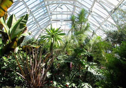 Plants in the Orangerie, Tower Hill Botanical Garden, Boylston, MA ...