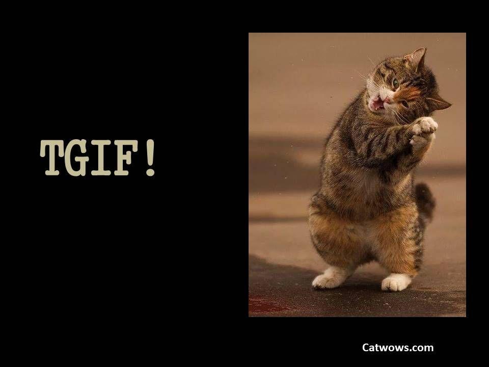 Cat Hug Video Youtube