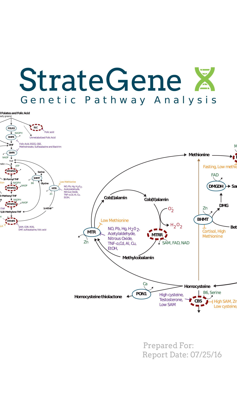 StrateGene