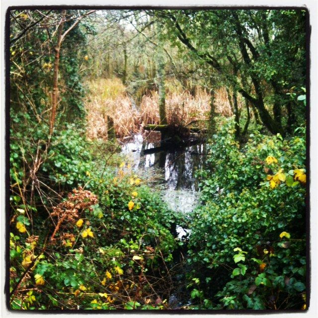 Renville Park in the rain near my home ... just a big puddle but one of my favourite places to think...