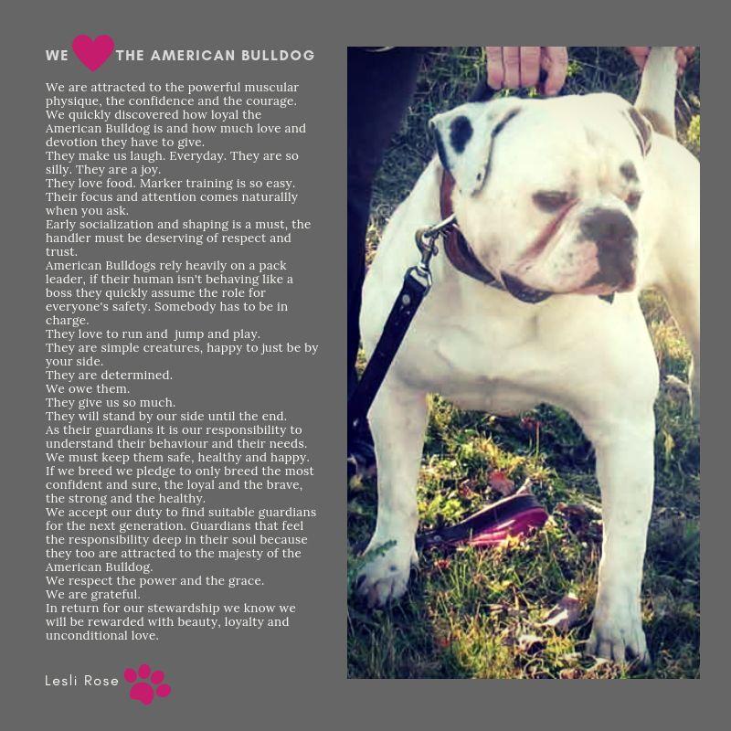 An American Bulldog Poem Bulldog American Bulldog American