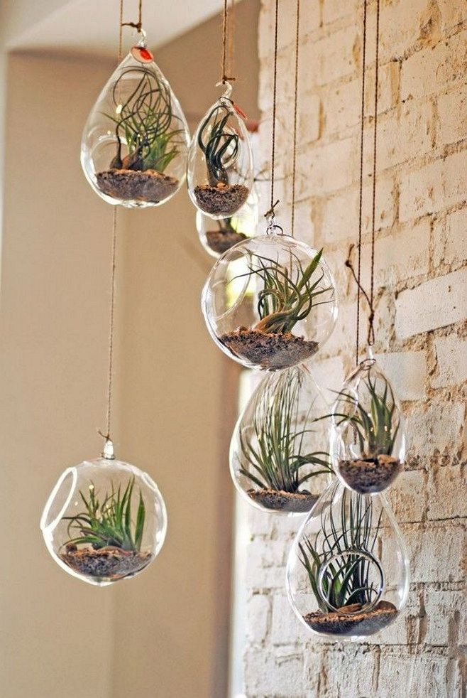 46 Great Air Plant Terrariums Ideas For Your Stunning Home Https Freshouz