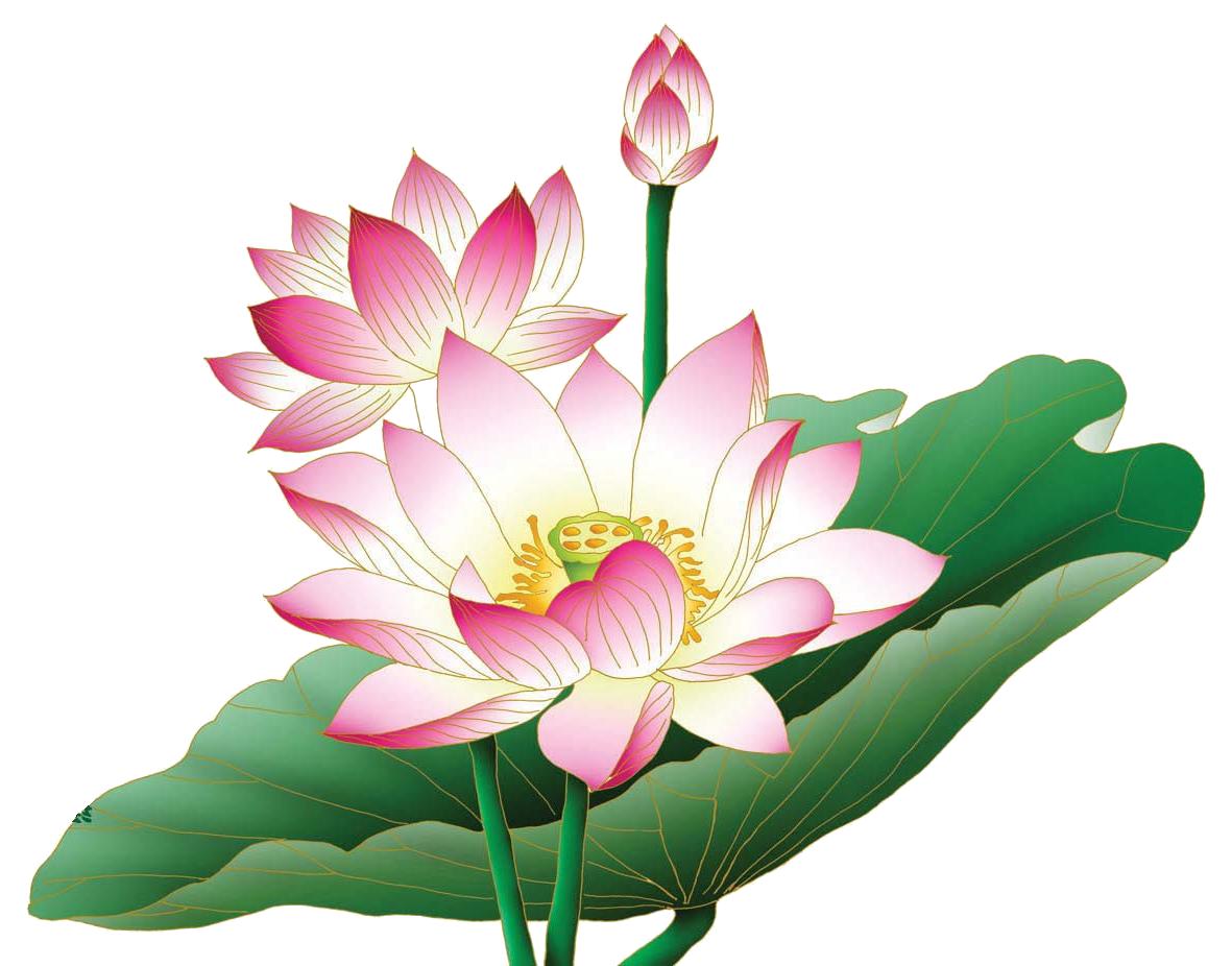 lotus png Google Search Hoa