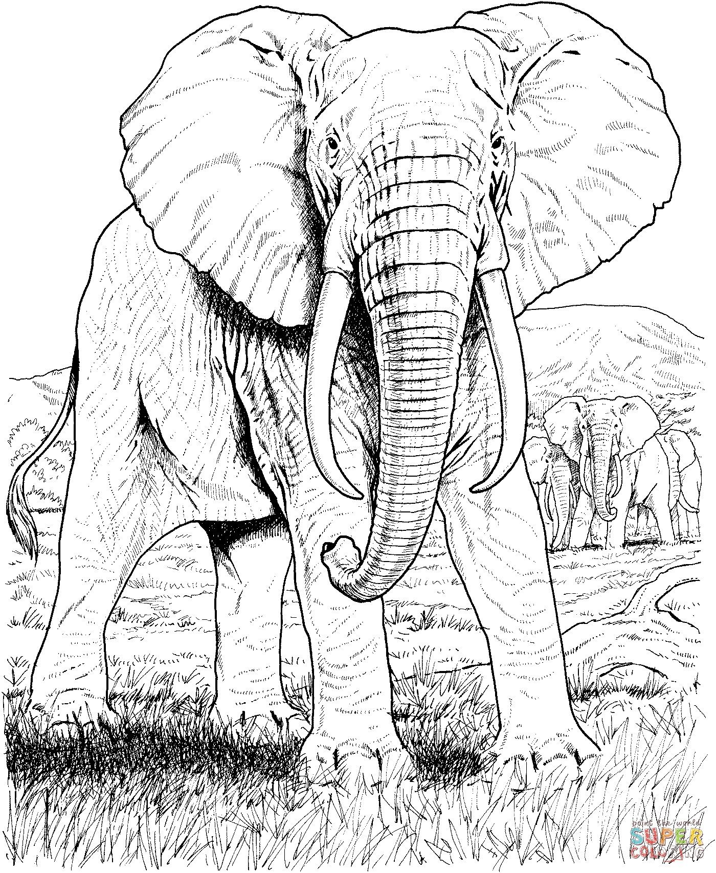 Einzigartig Malvorlagen Tiere Indien in 2020   Elefanten ...