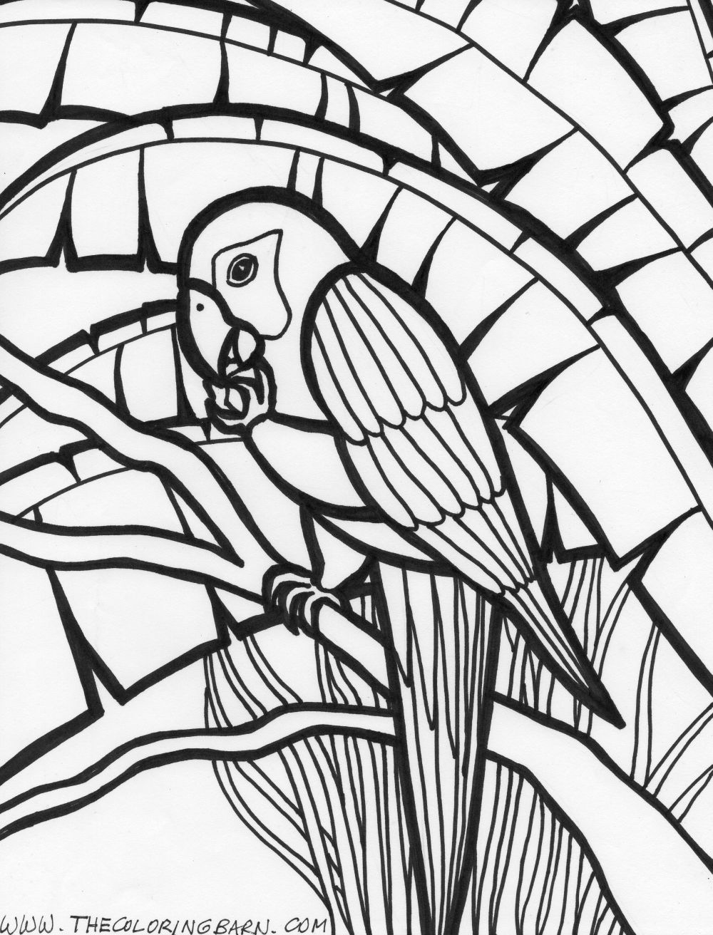 Rainforest Creatures Colouring Pages Free The Coloring Barn