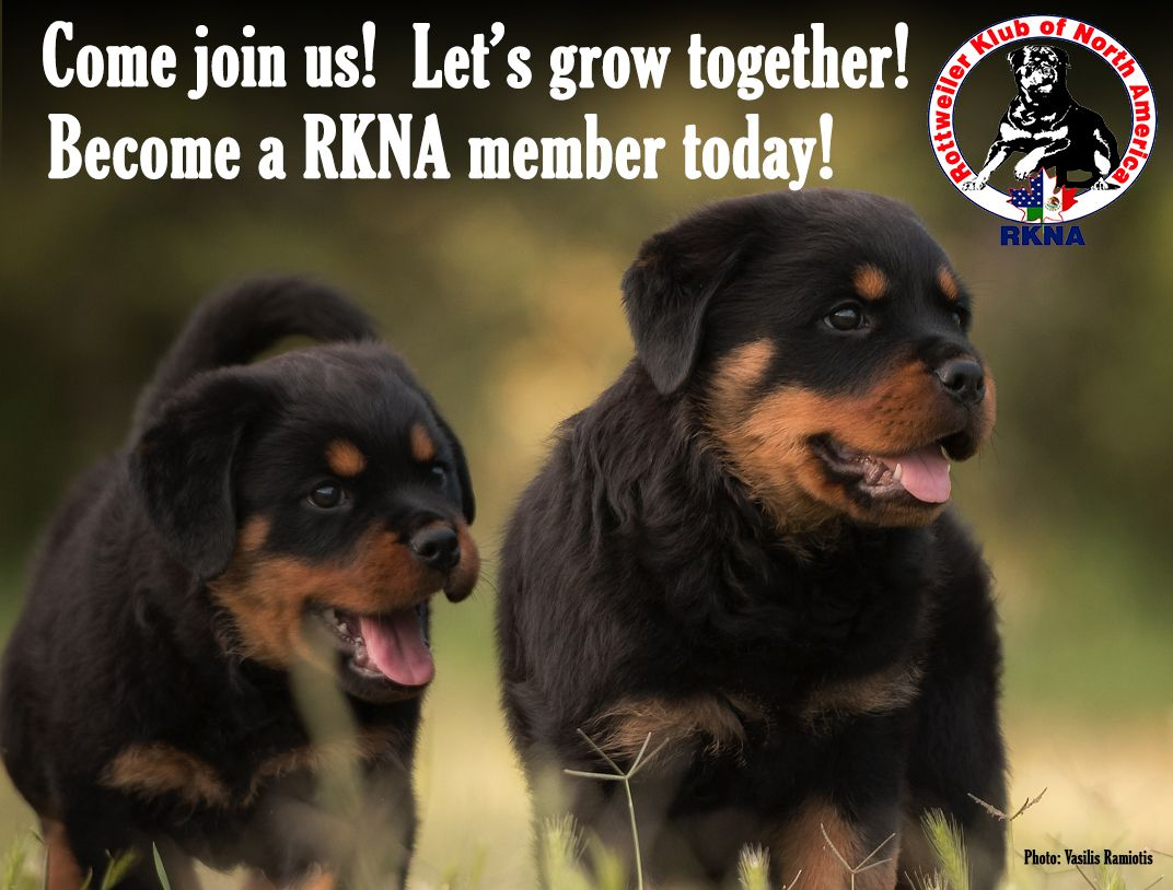 The Rkna Annual General Meeting Is Under Way To Sign In Go To