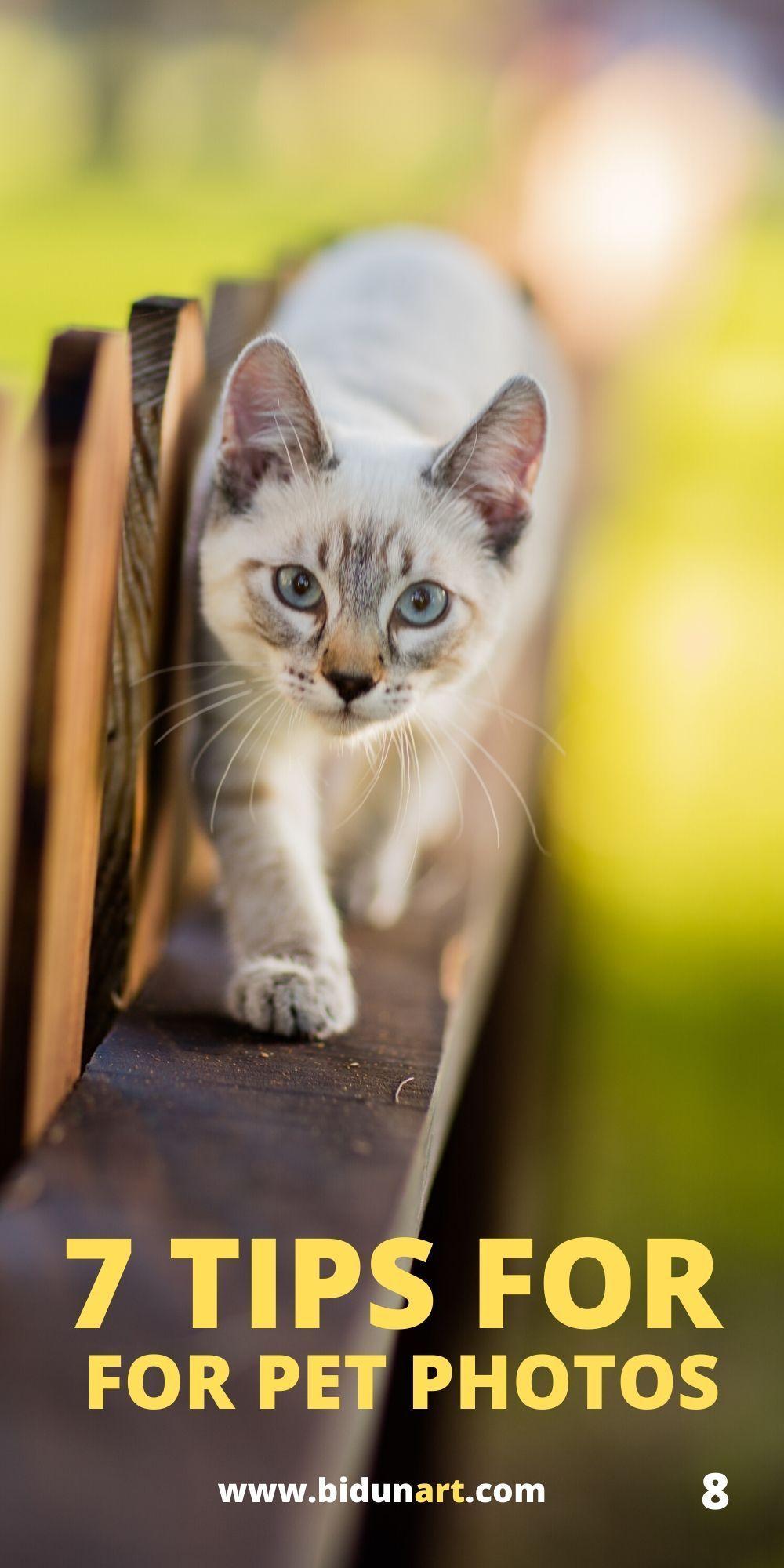 7 Best Pet Photography Tips Pet Photography Tips Holiday Pet