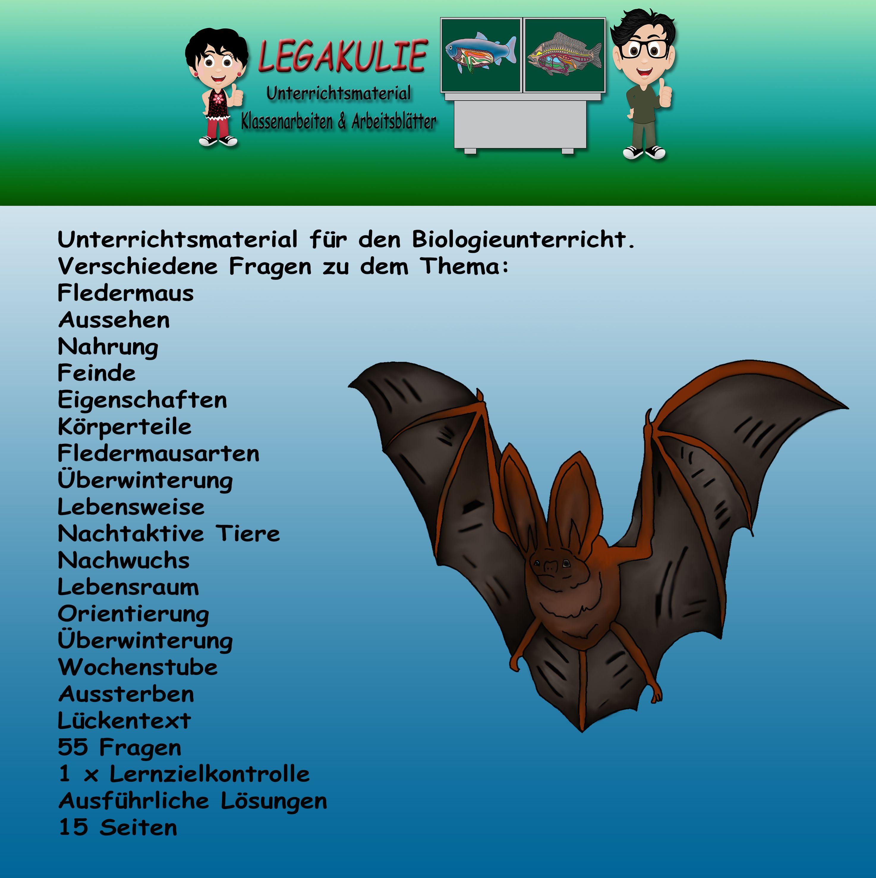 Fledermaus | Klassenarbeiten, Nachtaktive tiere und Fledermaus