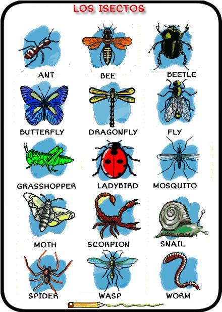 Habla Inglés Ya Los Insectos En Inglés Manualidades Insectos