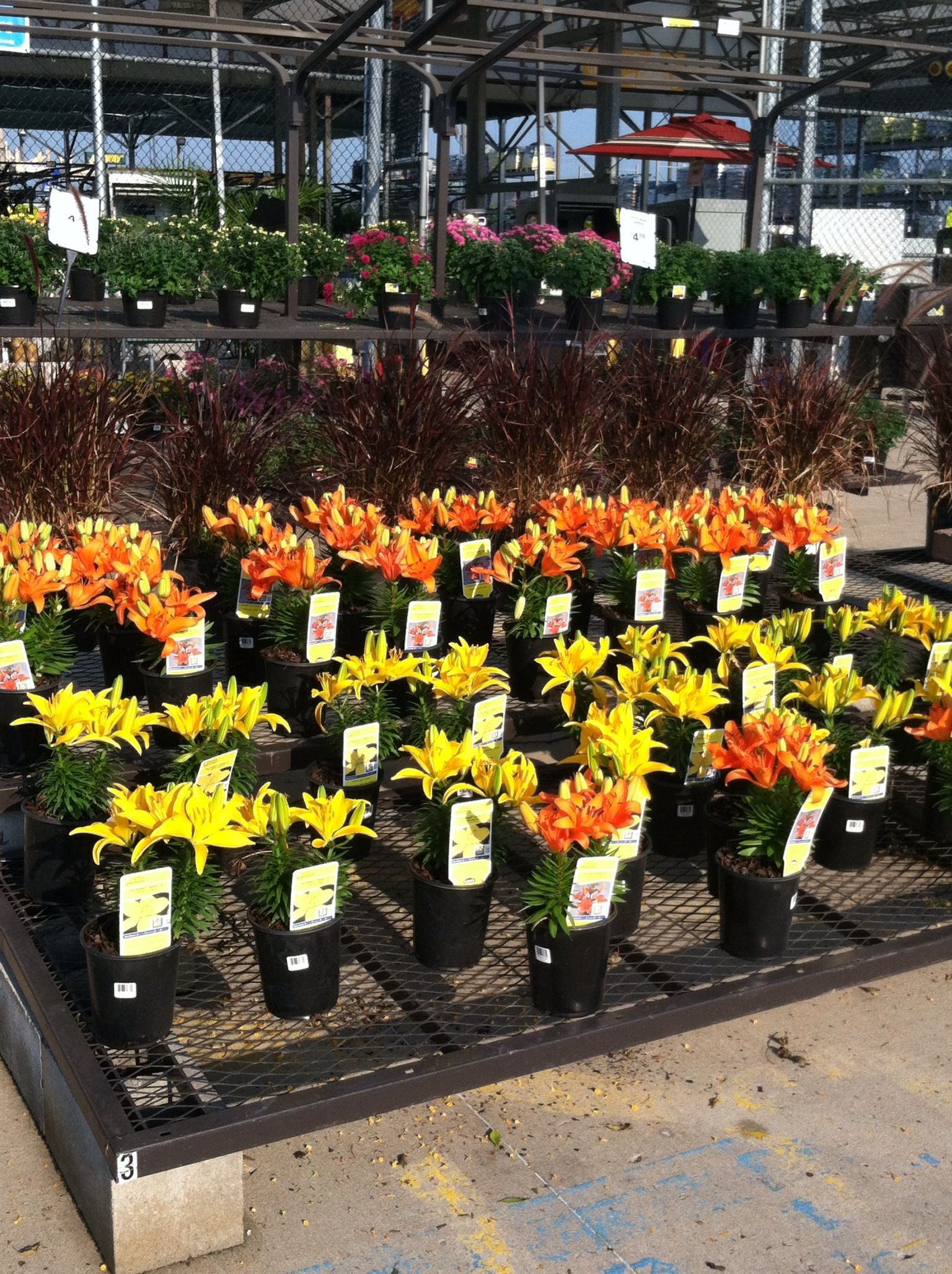Nice lily flowers at lowes garden pinterest lilies flowers nice lily flowers at lowes mightylinksfo