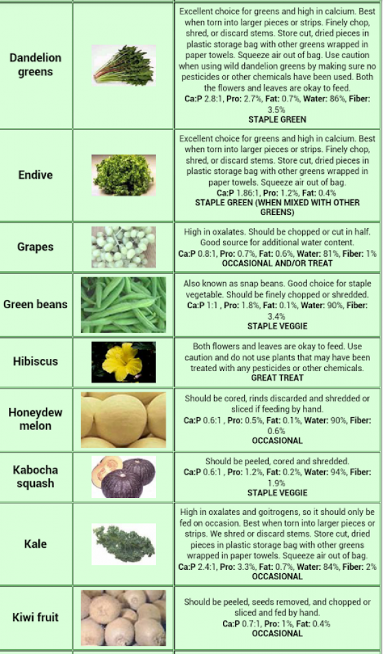 Go Back Gallery For Bearded Dragon Food Chart