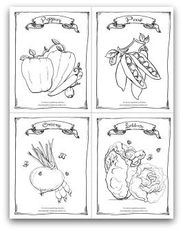 free printable garden peppers peas onions and lettuce coloring
