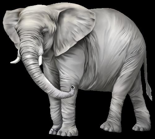 Elephant Png Clipart Elephant Clip Art Elephants Photos Elephant