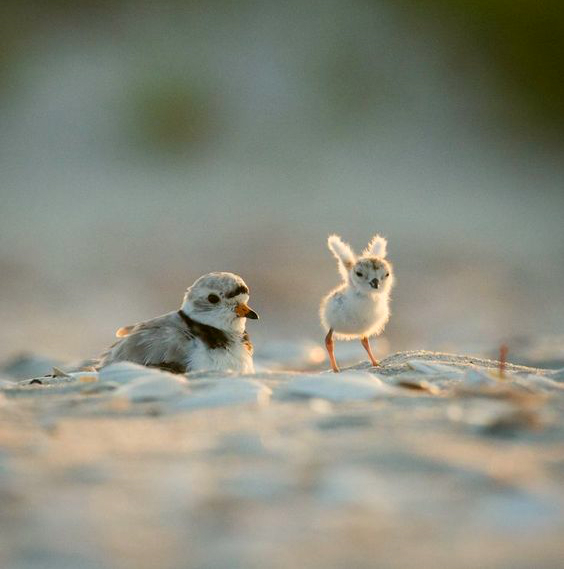 Baby bird trying to fly.   Cute baby animals, Birds, Animals