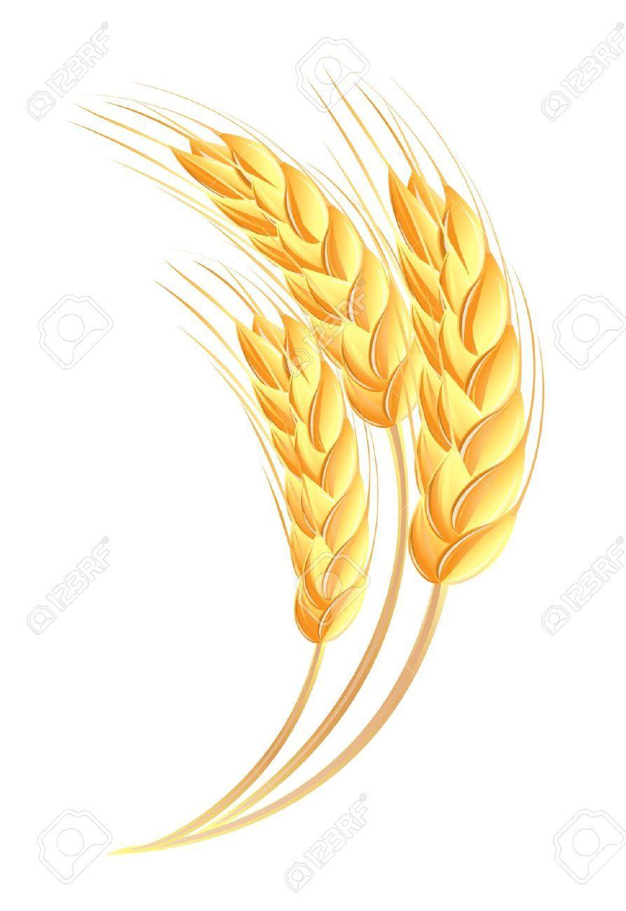 Wheat Ears Icon Logotipo Trigo