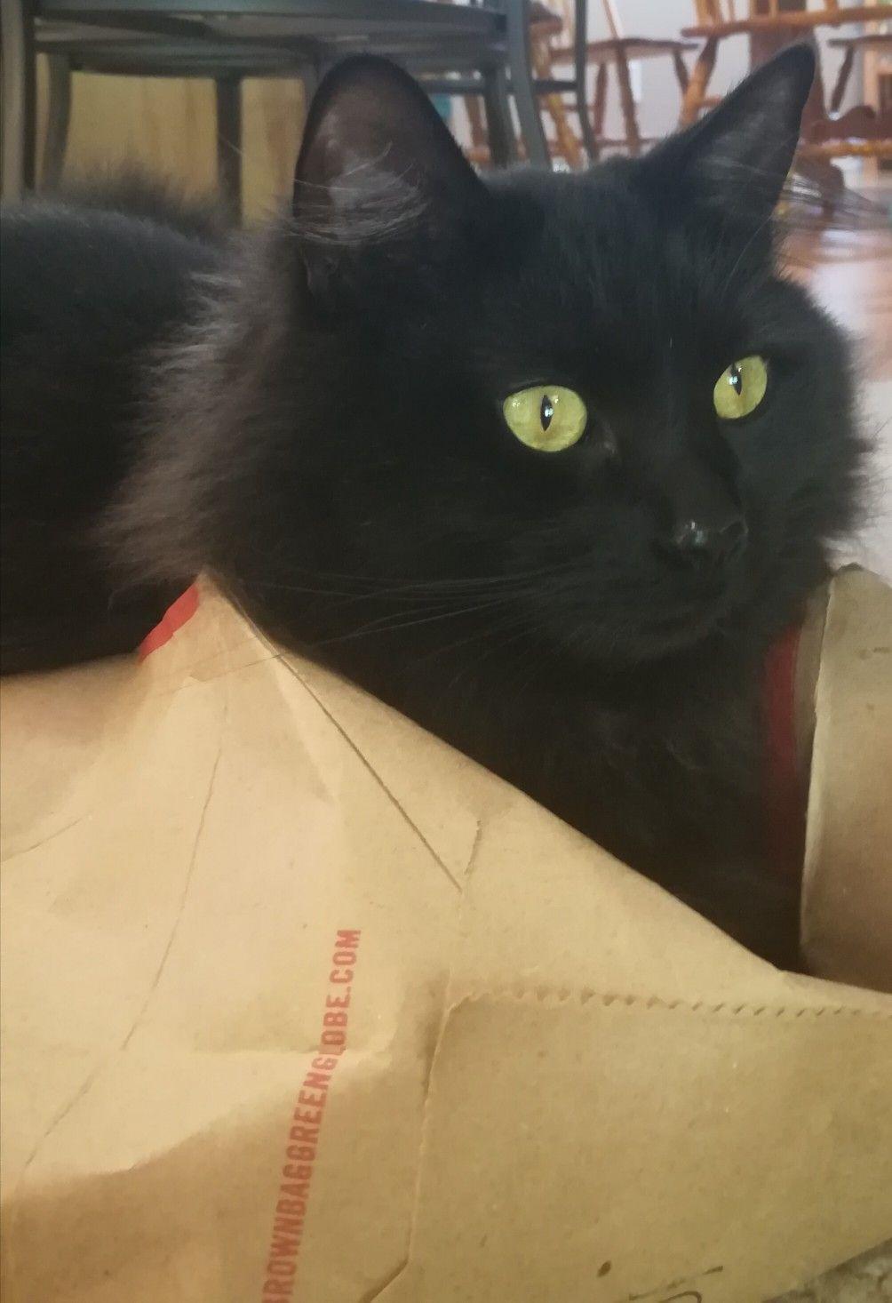 Pin On Kitty