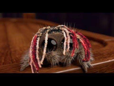 Lucas The Spider But You Will Hate Him Now Lucas The Cutest Spider