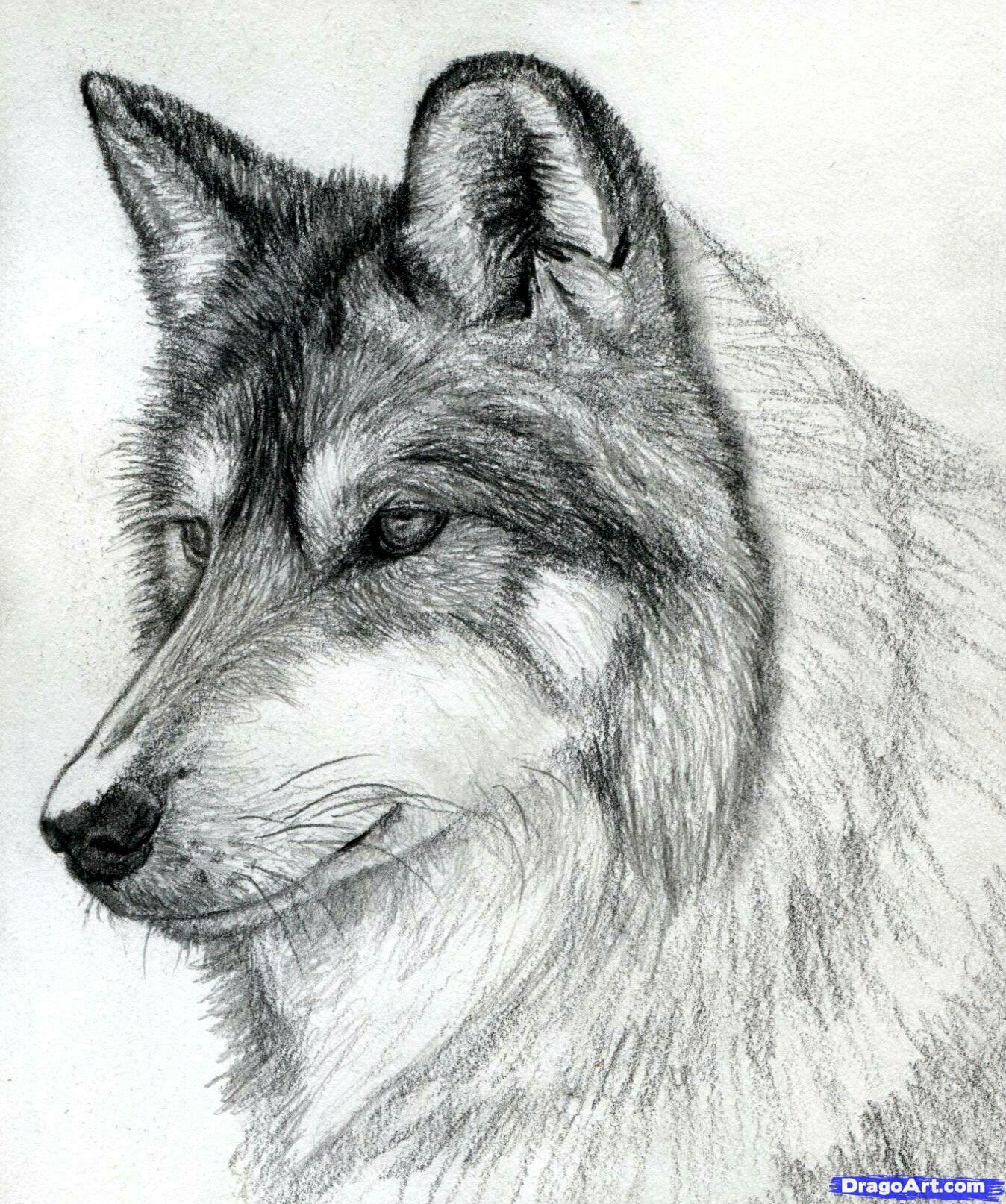 Pin By Hefereja On To Draw Paint In 2018 Pinterest Loup Dessin