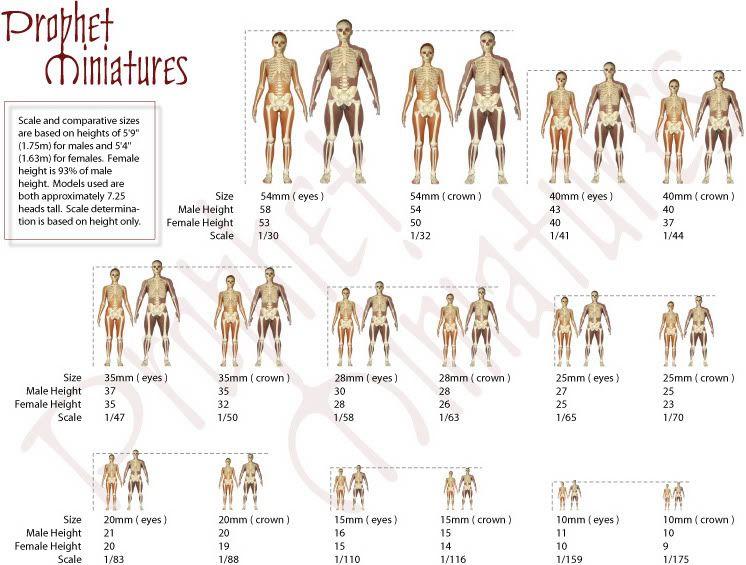 Armature Scale Charts Miniatures Tutorials Sculpting Tutorials