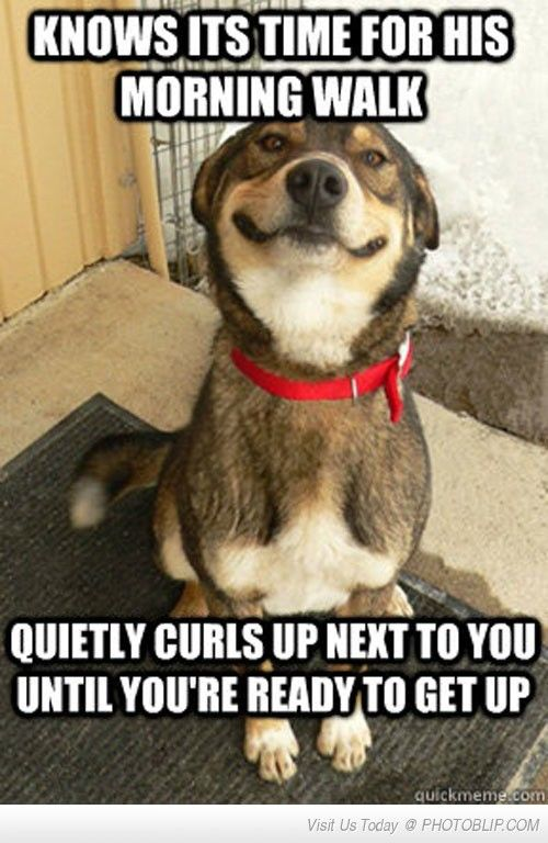 Good Guy Dog Waits Patiently!
