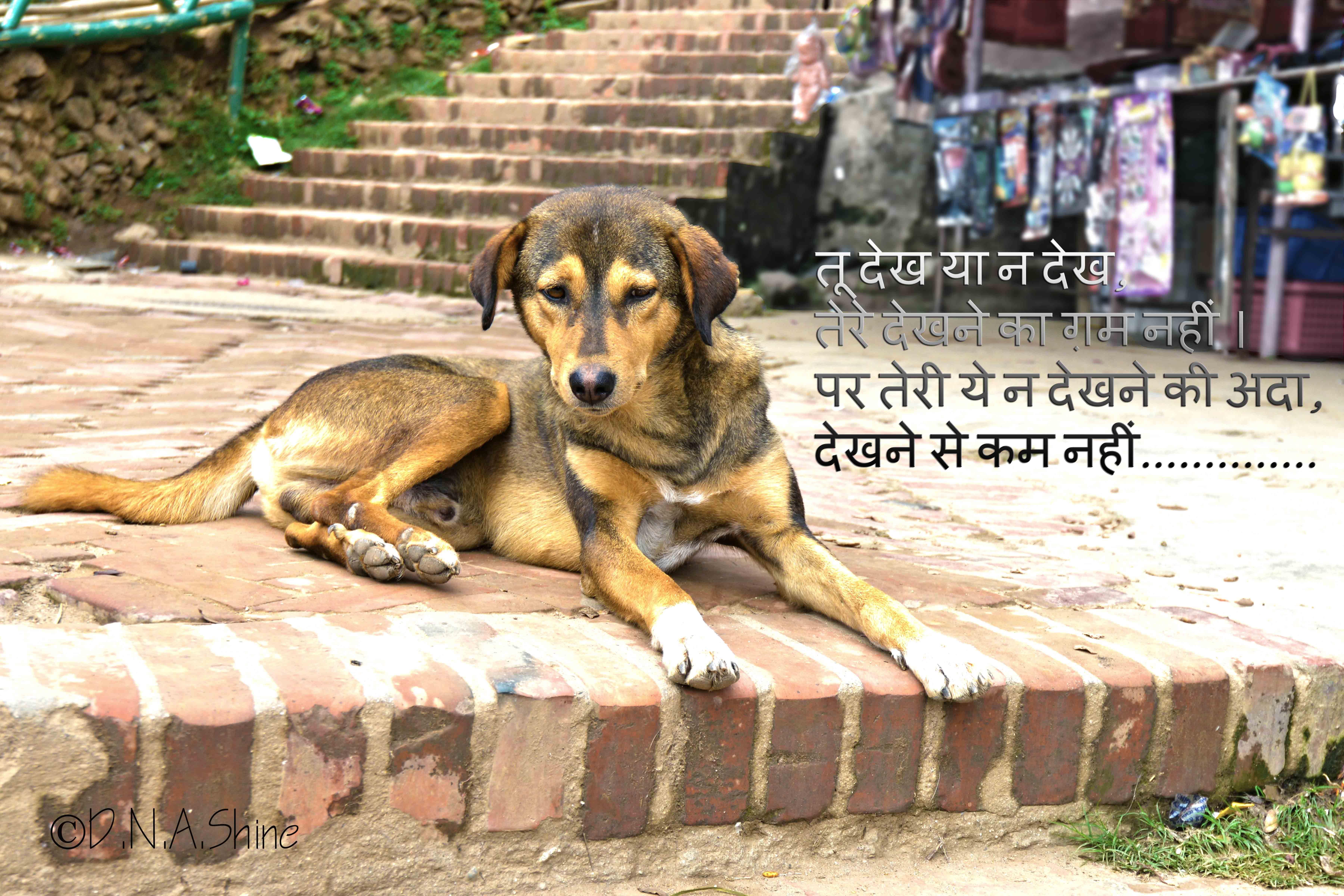 Love Hindi Dog Dogs Animals Hindi