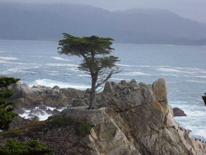 Seven Mile Drive Carmel Ca Address Phone Number Tickets Tours Attraction Reviews Tripadvisor