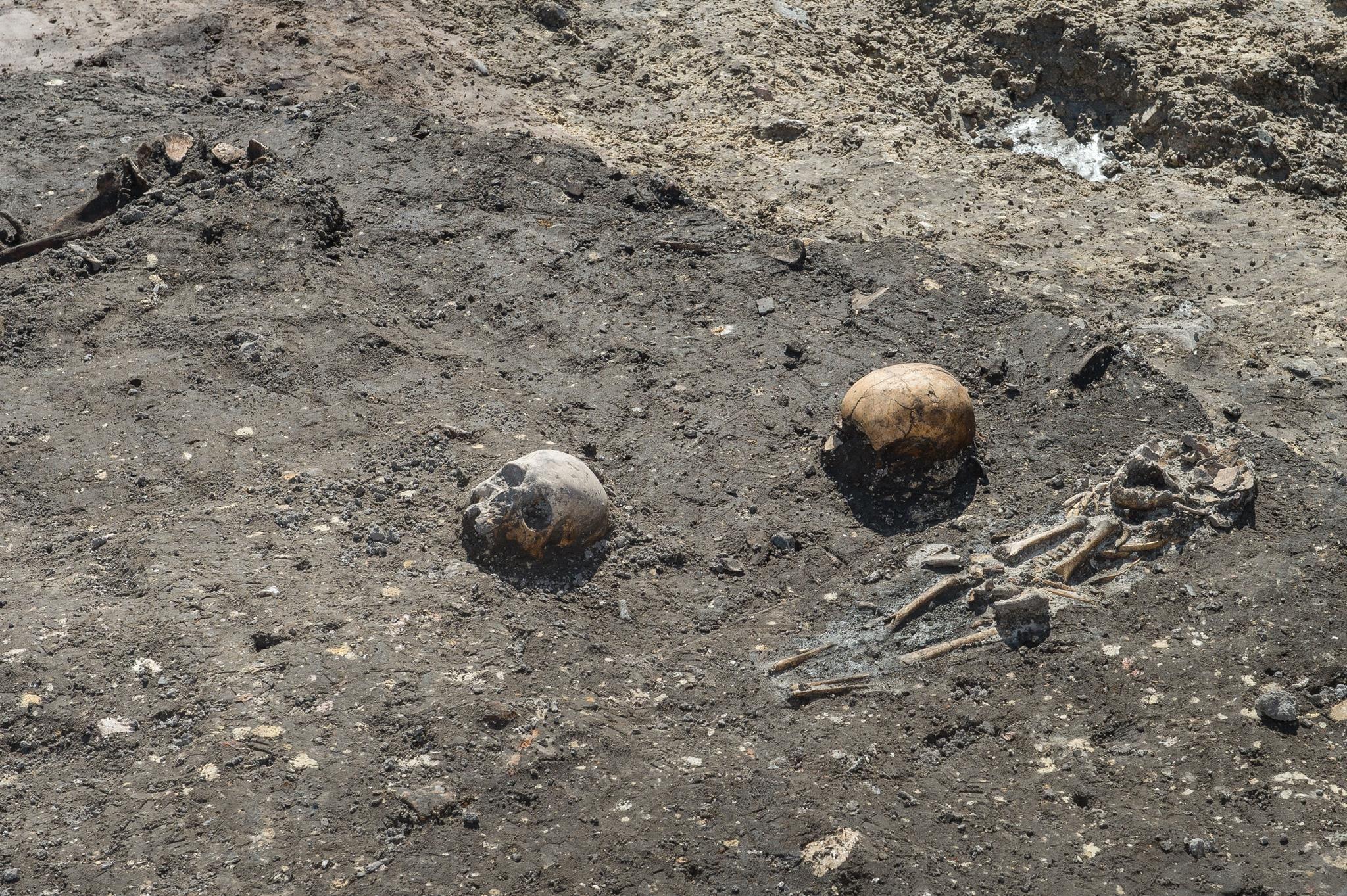Enkele gevonden skeletten.
