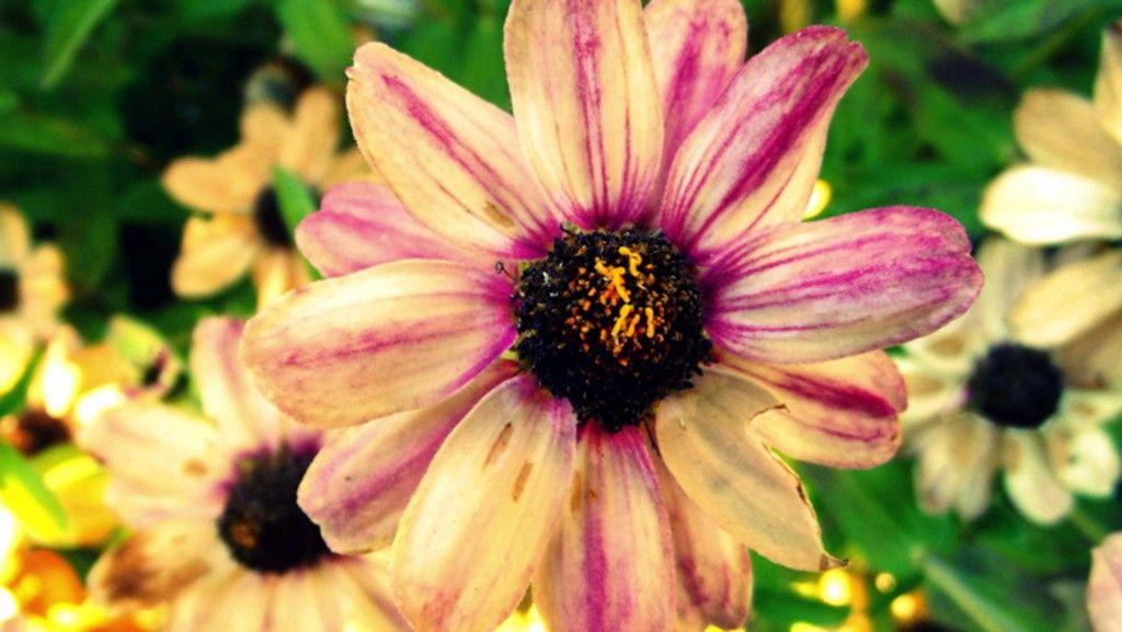 Photo 19: Flower